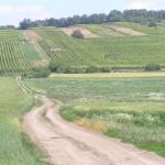 Winnice - Blatnička (subregion slovacki)