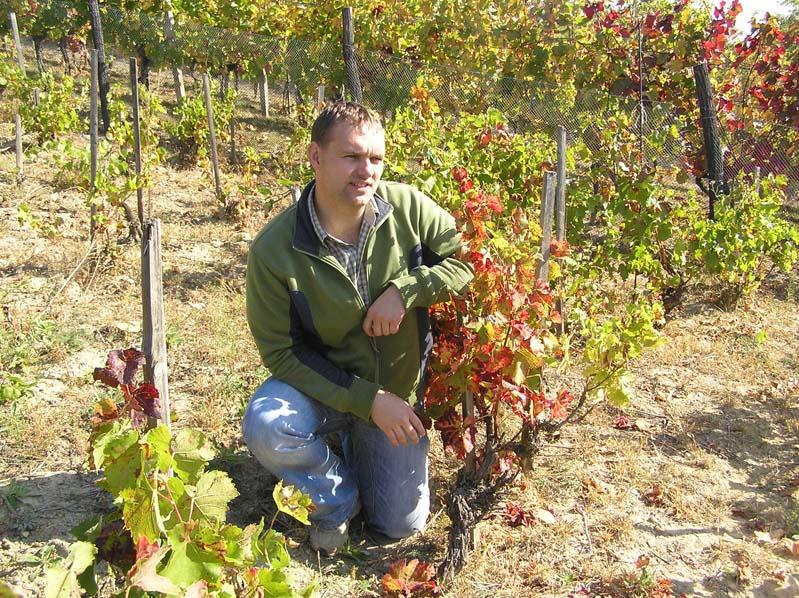 Winiarz Koráb w starej, 75-letniej winnicy - Boleradice
