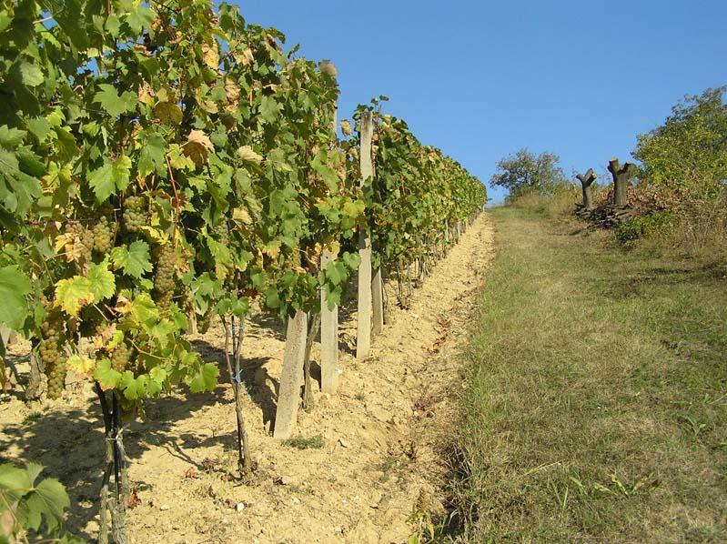 Winnice - Boleradice (subregion velkopavlovicki)