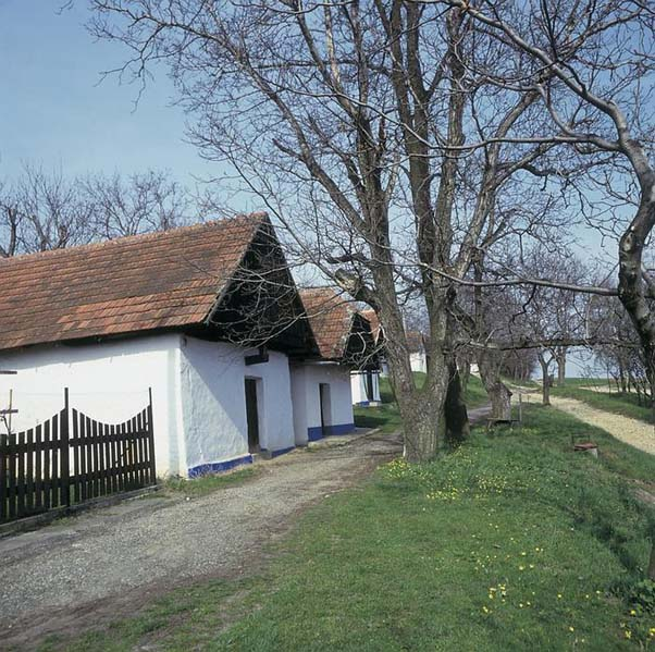 Piwniczki win - Vlčnov (subregion slovacki)