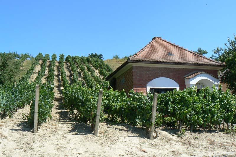 Domek winiarski w winnicy w Čejču