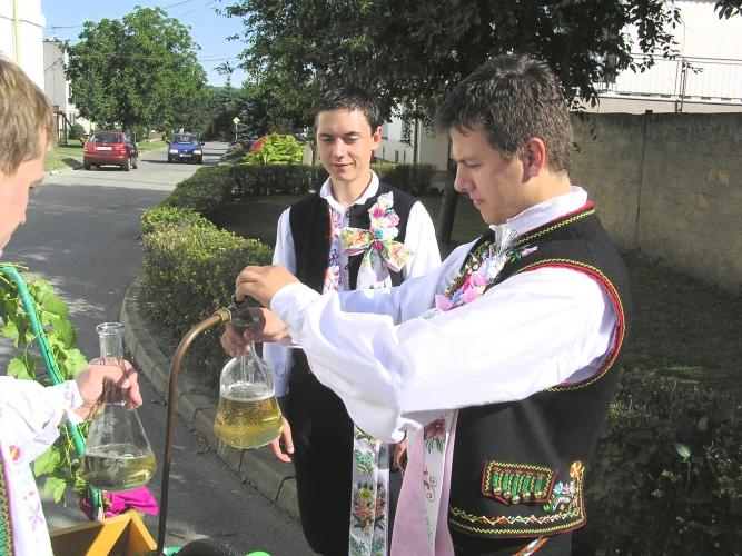 Winobranie na Morawach