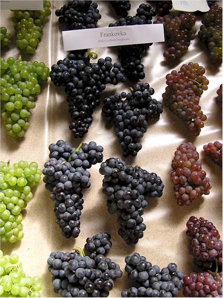 Winogrona na wystawie