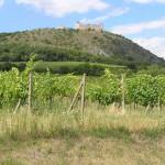 Winnice - Wzgórza Palavskie