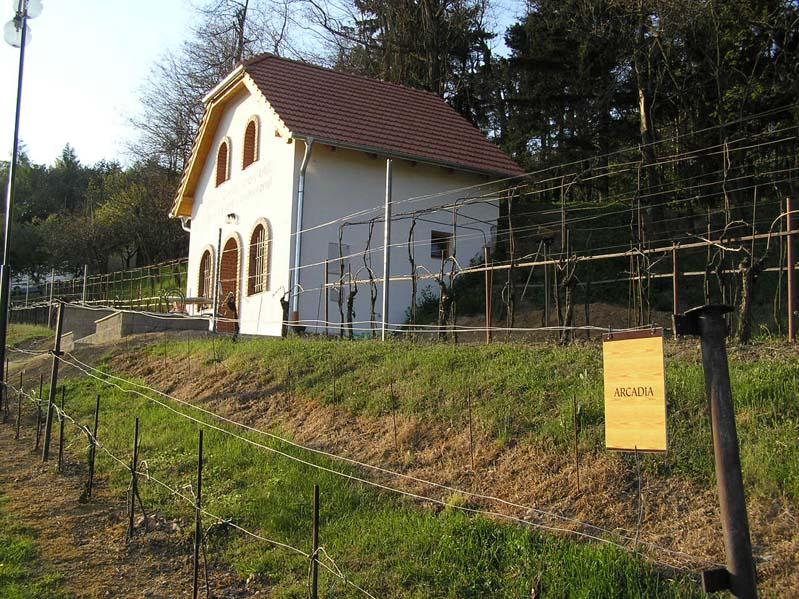 Piwniczka win w winiarstwie Sádek – subregion znojemski