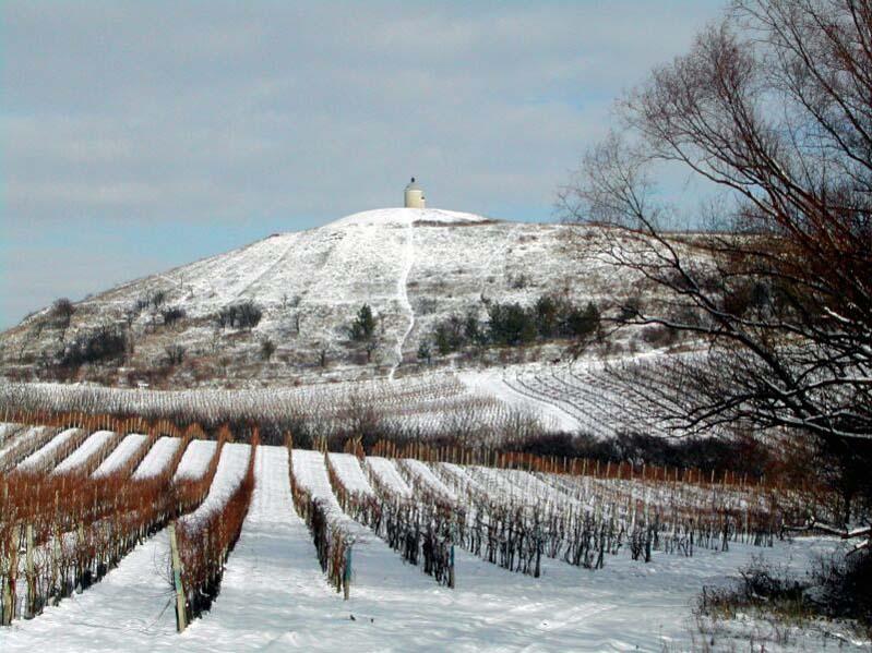 Velké Bílovice - zimowe winnice