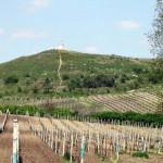 Velké Bílovice - wiosenne winnice