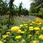 Winnica ekologiczna