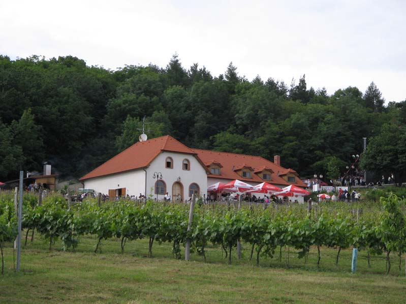 Winiarstwo Sádek - Kojetice - subregion znojemski