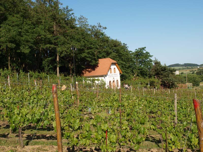 Winiarstwo Sádek – Kojetice – winnice i piwnica win