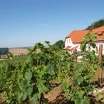 Winiarstwo Sádek – Kojetice