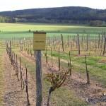 Winiarstwo Sádek – Kojetice – winnice