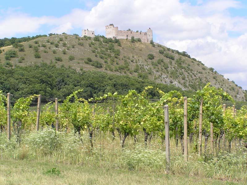 Winnice pod Wzgórzami Palawskimi