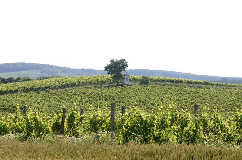 Winnica morawska