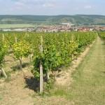 Winnice nad Kobylí - subregion velkopavlovicki