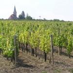 Vrbickie winnice