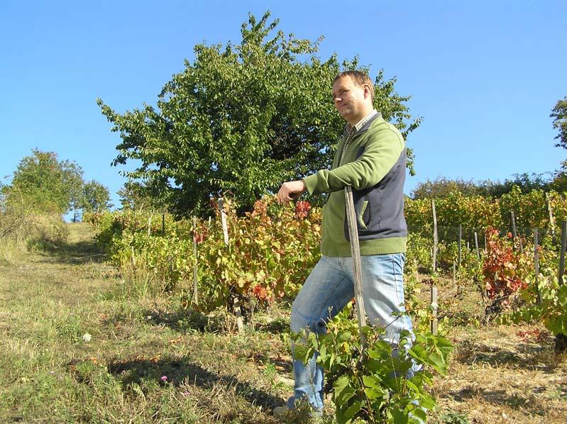 MORAWY i winiarze