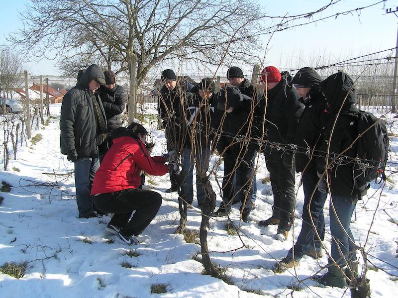 Praktyczny pokaz cięcia zimowego na owocowanie - Čejkovice